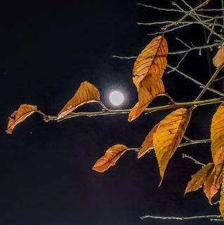 桜と月.jpg