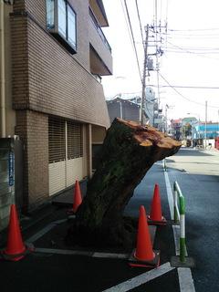 sakurao.jpg
