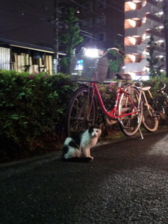 shiro02.jpg